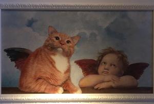 Cats are true angels Svetlana Petrova and Zarathustra Cat
